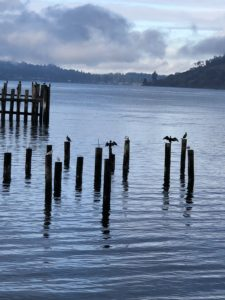 Cormorants at Titlow Beach